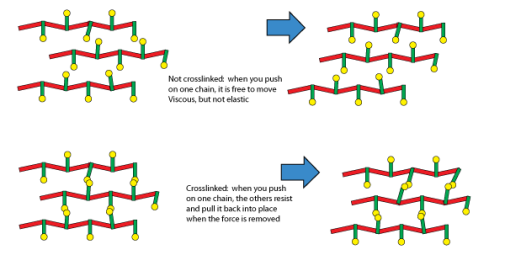 gluten cross-linking